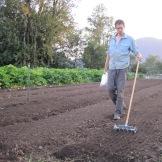 seeding carrots